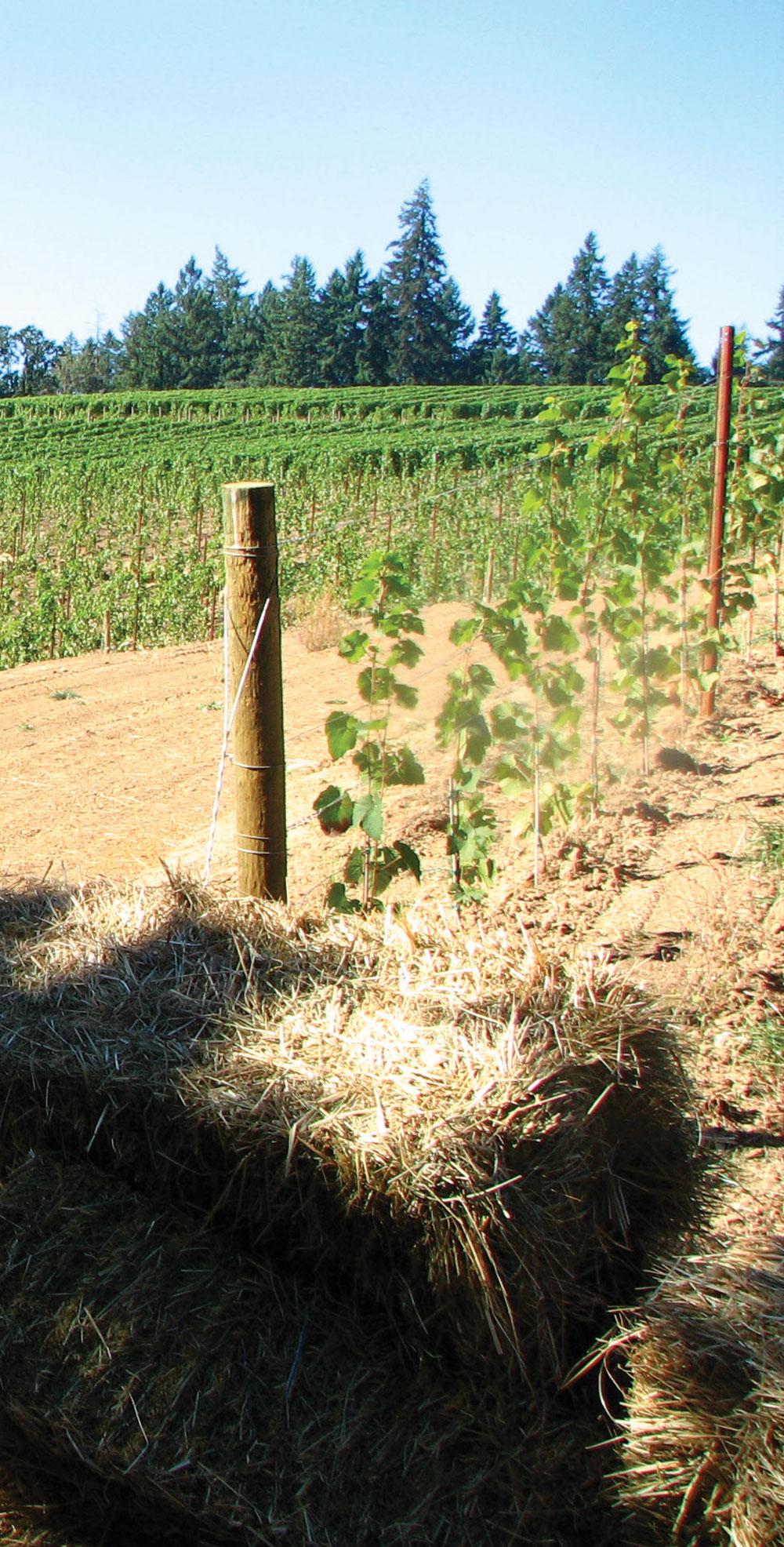 Le domaine de 88 acres, situé dans les coteaux au sud-ouest de Portland dans l'État de l'Oregon
