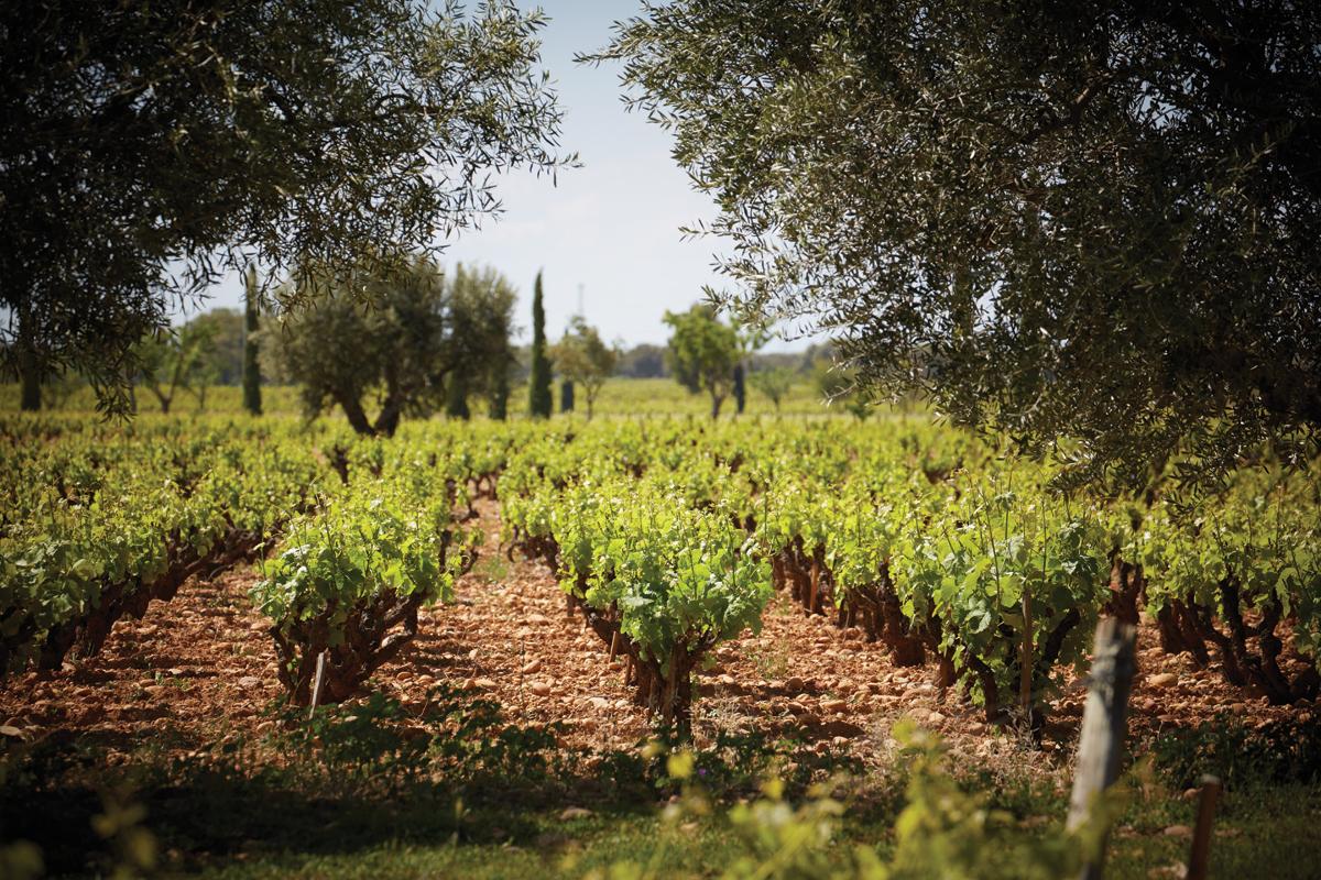 m12-adn-primum-familiae-vini-beaucastel-vineyards