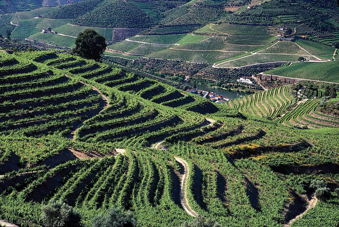 m13-tchin-malvedos-terraced-vineyards